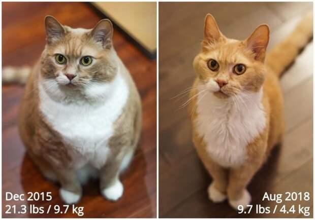 Кот-толстяк, которого бросили хозяева, нашел новый дом и преобразился
