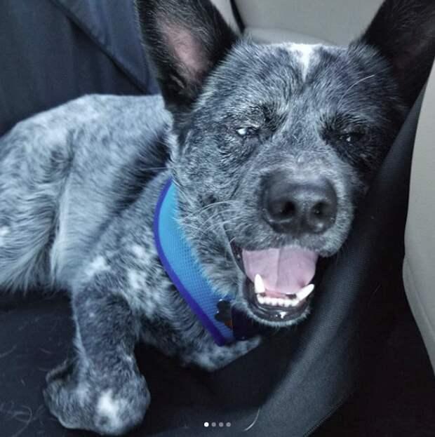 Купили щенка в зоомагазине — и удивились! Малыш Лось вырос необыкновенным и смешным…