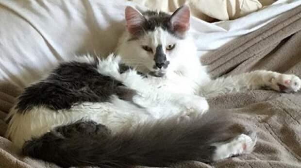 Бездомный кот сам выбрал себе хозяйку, а затем помог девушке в трудный момент