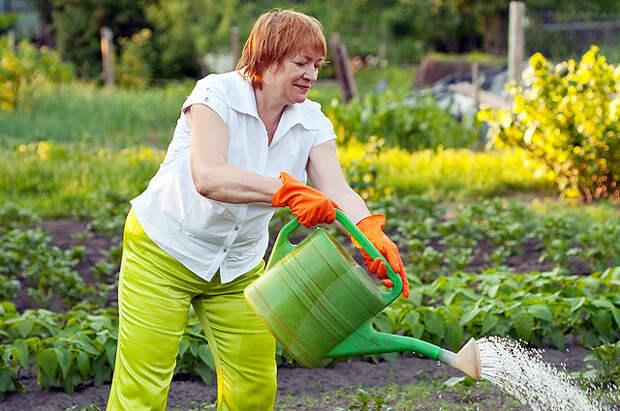 Вот какие растения в жару нужно полить в первую очередь