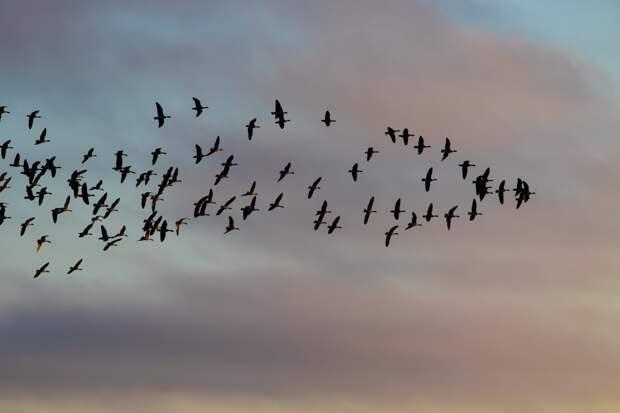 В зоопарке Удмуртии рассказали, когда ждать прилета птиц