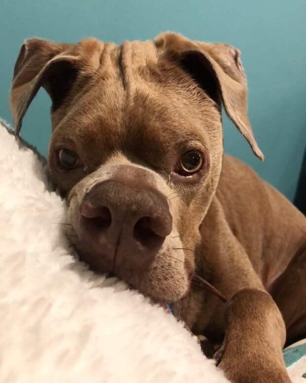 Некрасивый пес из пуэрто-рико наконец нашел себе хозяев