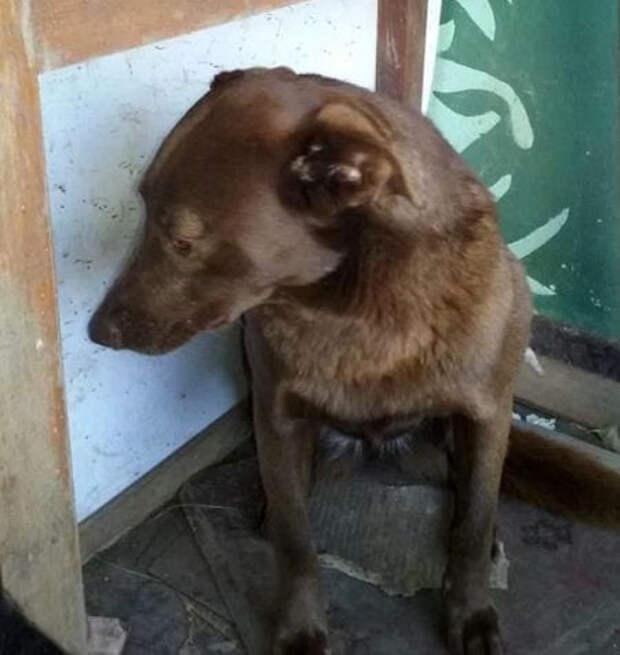 Она ждала этот миг 2 года! Собака жила с опущенной головой, пока однажды не почуяла чудесный запах…