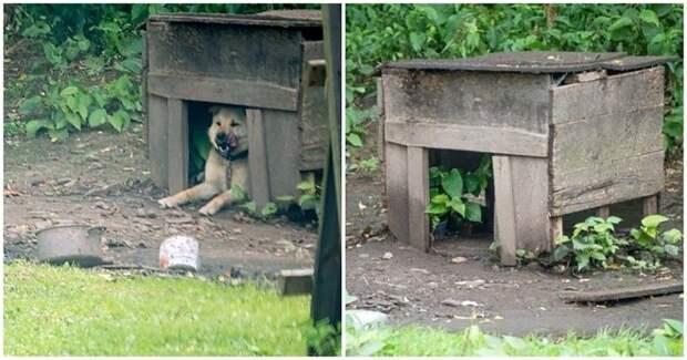 Привязанный к старой будке, пёс мучился на цепи, но хозяев это совершенно не волновало