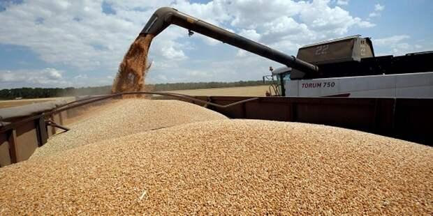 Российский экспорт зерна вырос на 28,5%