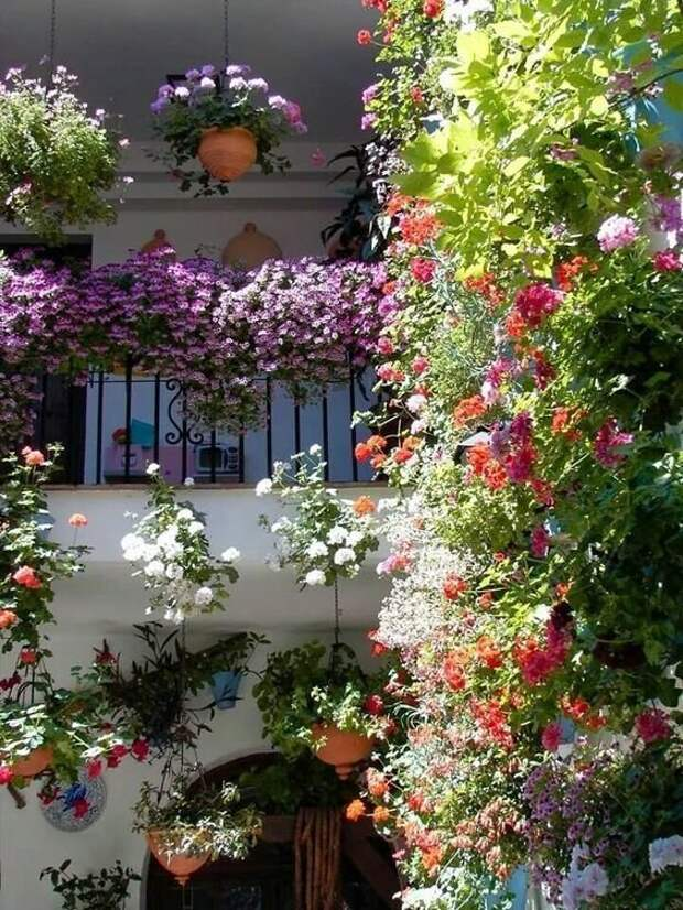 Тот случай, когда садовода уже не удержать Зелены, Фабрика идей, дом, красота, перебор, садоводы, цветы