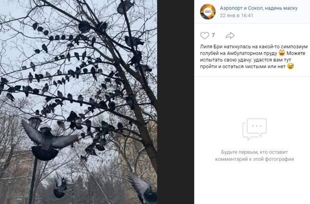 Фото дня: облюбованное голубями дерево в Амбулаторном пруду