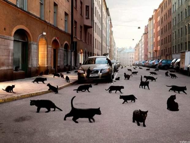 1366x768 Город, машина, кошки, чёрные обои на рабочий стол 26925