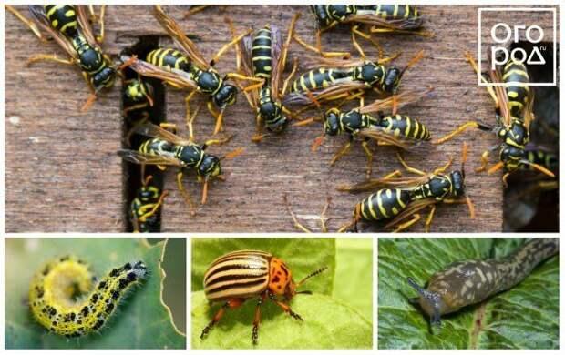 Коллаж - насекомые