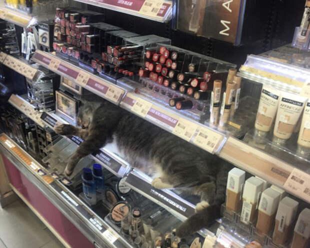 10 фото, доказывающие, что котейки могут спать где угодно