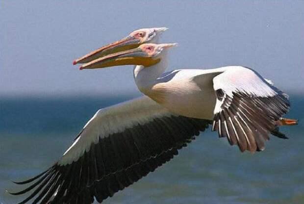 Природа без фотошопа 27