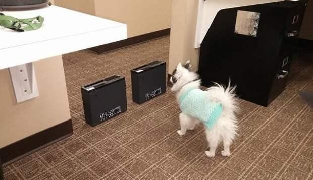 29 фото «крутых» собак, которые боятся даже мухи
