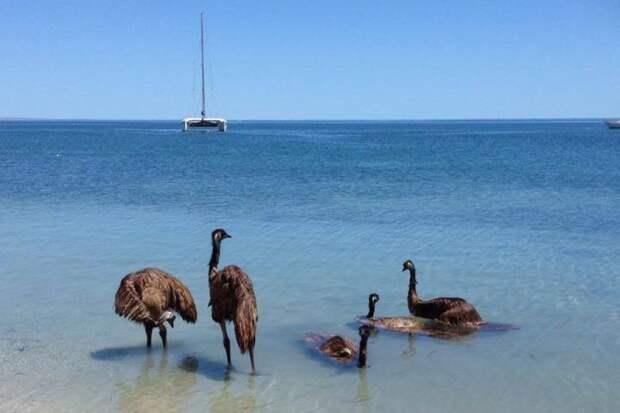 Животные Австралии, которые плевать хотели на ваши стереотипы