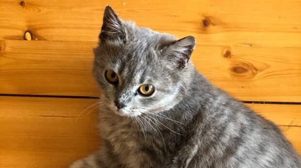 Как только парень открыл дверь в авто, в салон юркнула бездомная кошка с грустью посмотрела ему в глаза