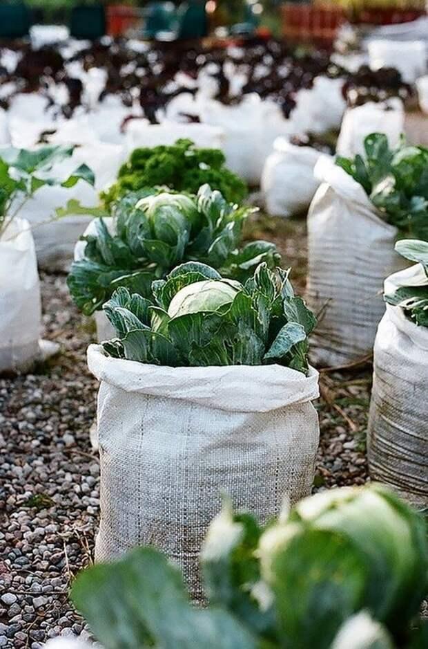 Ценные огородные идее для высокого урожая и экономии сил