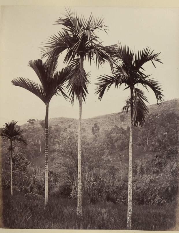 Albom fotografii indiiskoi arhitektury vzgliadov liudei 85