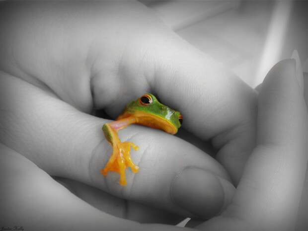 tree_frog_dslr_rookie_0