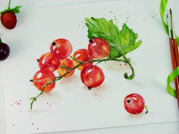 Красная смородина акварелью
