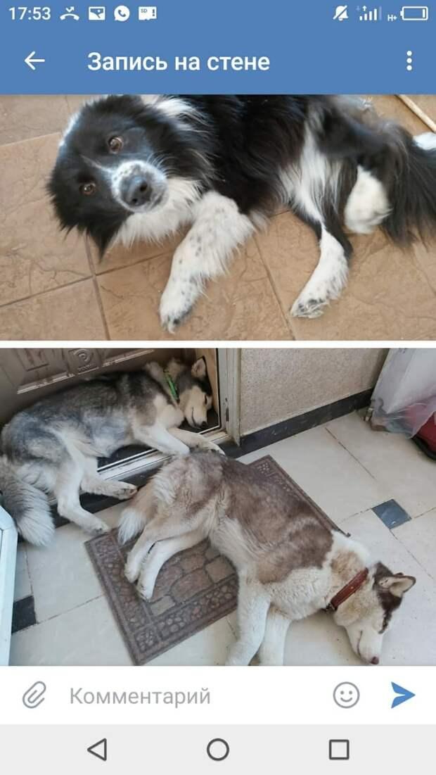 """Волонтеры ищут собак, которых выгнала в лес певица Светлана Разина: «Больше не должны жить с нами"""""""