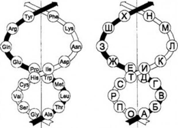 Проекция объемной системы аминокислот и проекция объемной системы алфавита