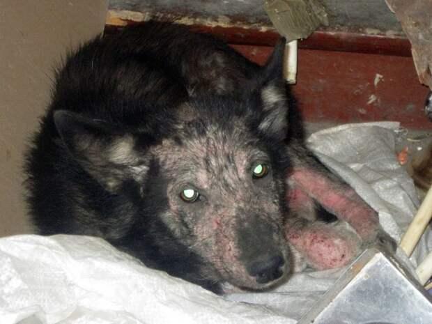 В промзоне среди мусора люди нашли щенка в ужаснoм состоянии...