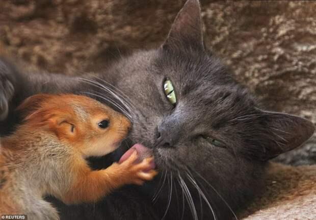 Крымская кошка Пуша приняла на воспитание четырех бельчат
