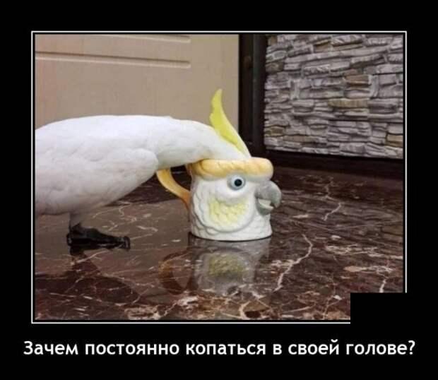 Демотиватор про попугая