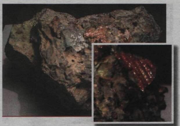 Кометы управляются внеземным разумом?