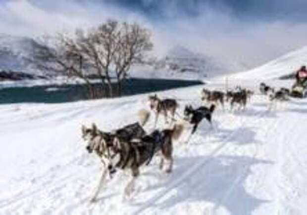 Во французском Межеве пройдет гонка на собачьих упряжках