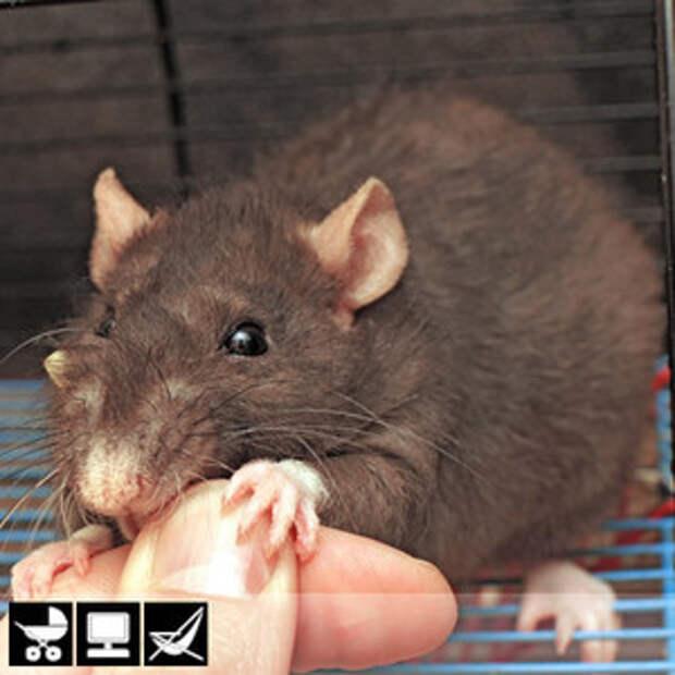 Как выбрать домашнее животное в зависимости от типа твоего характера и размеров жилплощади