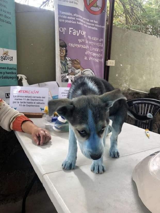 «Синяя собачка!»: маленькая пациентка удивила врачей своим странным видом…