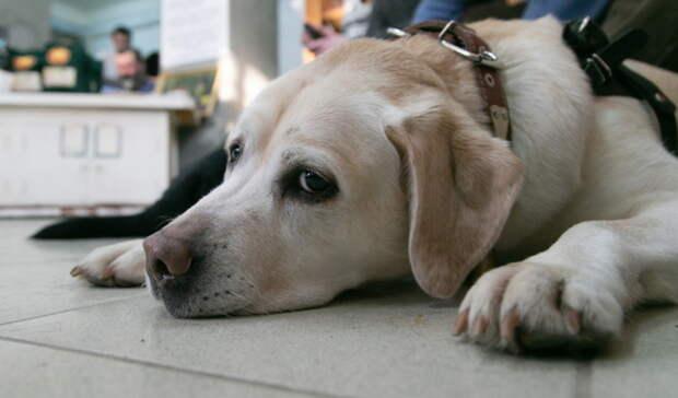 «Собака при смерти»: водитель Niva переехал бездомную собаку в Арамиле