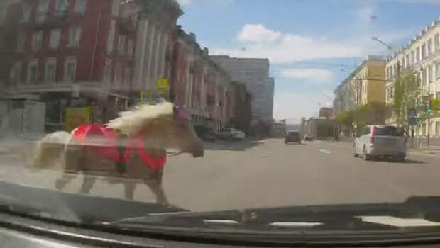 Попал под лошадь: водитель отделался легким испугом