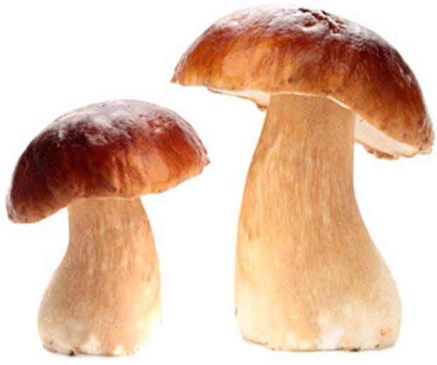 В новосибирской маршрутке выросли грибы