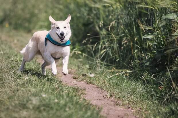 Ученые опубликовали 10 пунктов, которые помогут сделать вашу собаку счастливее