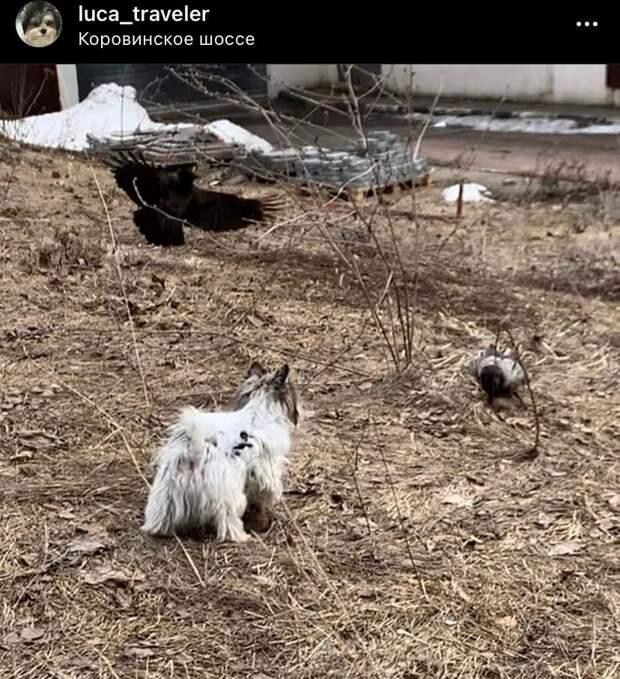 Фото дня: собака против ворон на Коровинке