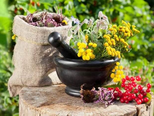 Лечебные растения и цветы./Фото: uhho.ru