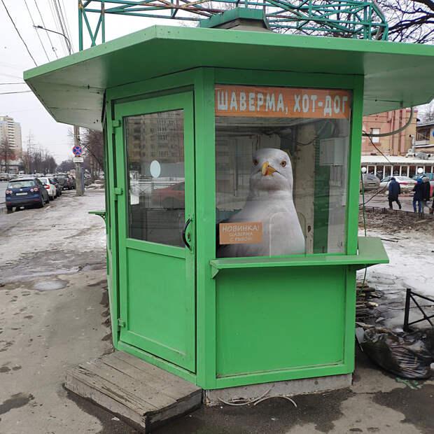 «Фантастические твари» и где они обитают в Петербурге (ФОТО)
