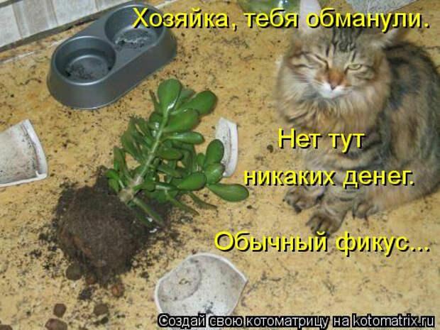 kotomatritsa_pV (500x375, 181Kb)