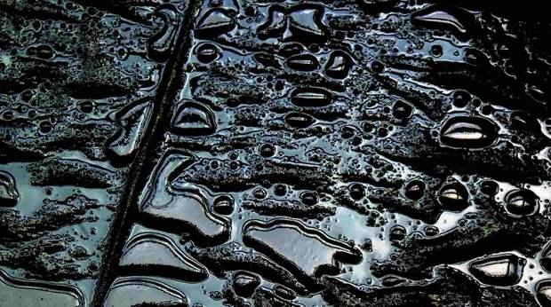 Ученые Удмуртии создали новую технологию восстановления залитой нефтью почвы