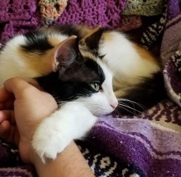 Бездомная кошка пришла к волонтеру с одним котенком, но вскоре появилась еще с несколькими