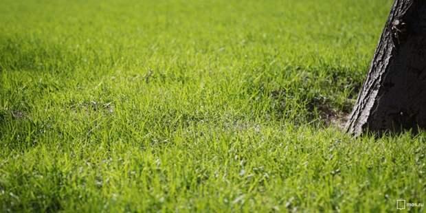 На Беговой аллее расстелили газон
