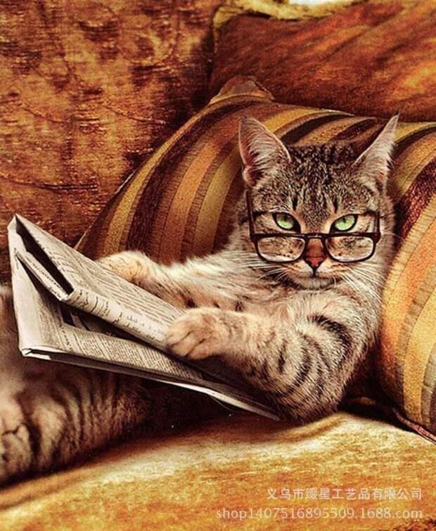 Добрая история про кошку