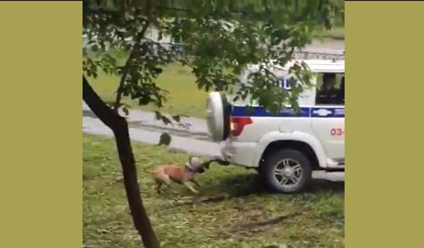 Полицейские на глазах у всех расстреляли собаку (ЖЕСТОКОЕ ВИДЕО)
