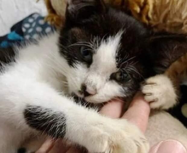 Бездомный котенок истосковался на улице, а теперь хватает за ноги временную хозяйку, будто прося ее не уходить