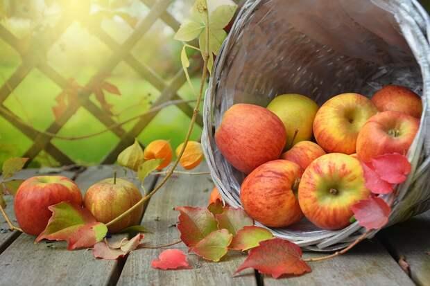 Большинство читателей газеты «Алтуфьево» любят осень