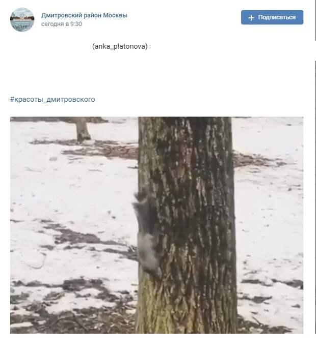 Фото дня: любопытная белка в парке «Вагоноремонт»