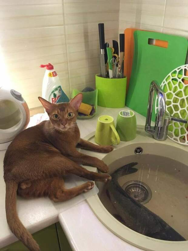 Кошки намекают нам на то, чего им не хватает
