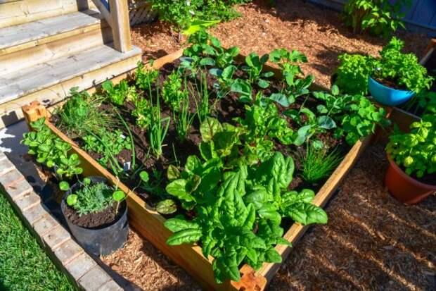Универсальные приемы для создания роскошного сада