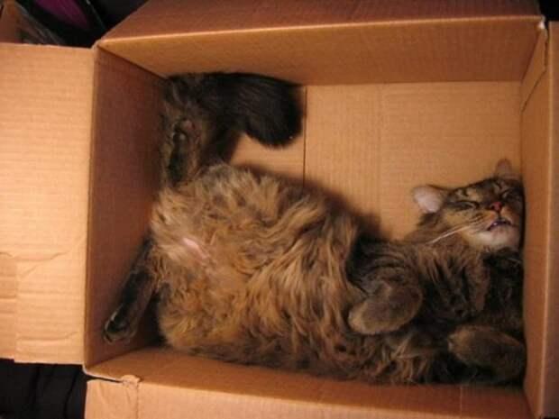 Коты, которые познали науку сна